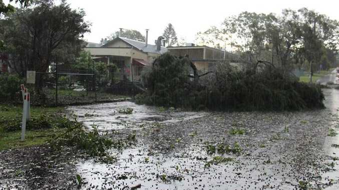 A storm smashed Kenilworth yesterday afternoon, blowing over trees. Photo: Vicki Rodwell.