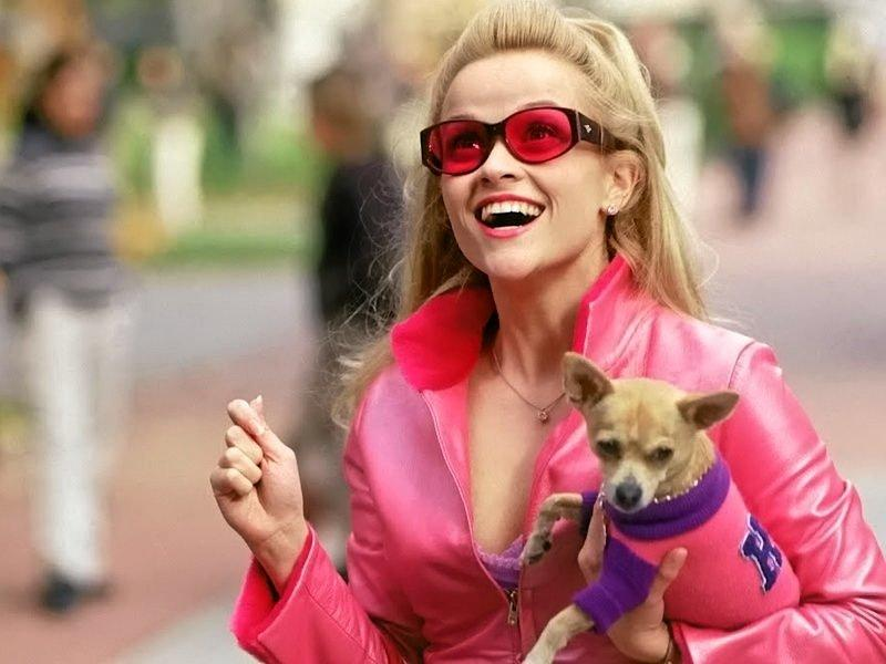 STAR DOG: Could your pooch play Bruiser or Rufus in the upcoming production of Legally Blonde The Musical?