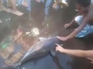 Endangered dolphin dies for selfies.