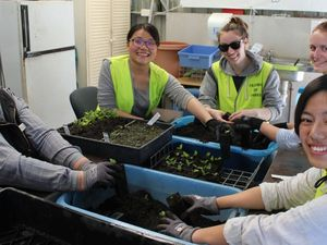 Toowoomba's indigenous plants branch out in the region