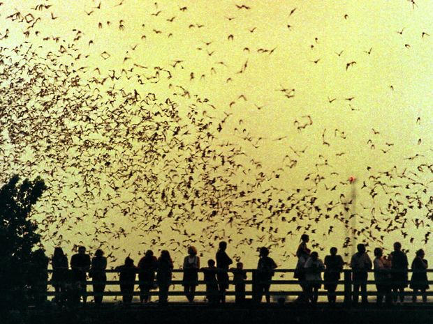 AUSTIN: Home of world's largest urban bat colony.