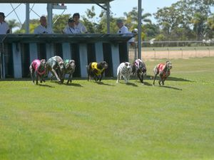 Bundy Greyhounds - 27 Feb 2016