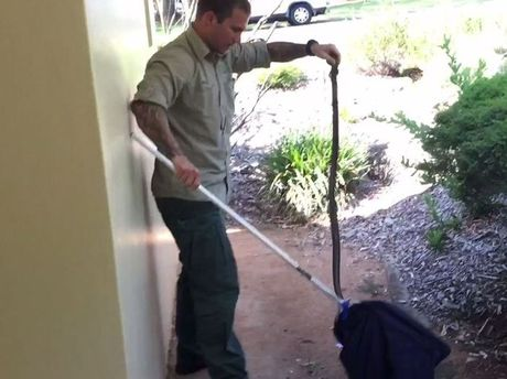 Ross McGibbon from Toowoomba Snake Catchers 24/7 catches a deadly brown snake at Picnic Point.