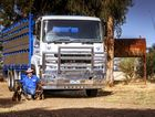 Shane Palmer is moving sheep and cattle in a trophy-winning Fuso truck. Photo Contributed