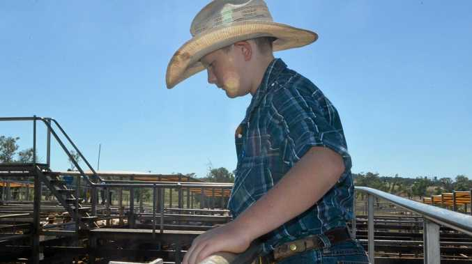 TO THE FUTURE: Jamen Harrison has a bright future in the cattle industry, selling his two beasts for more than $2000 in Roma.