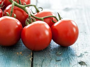The dirt on growing bigger, better tomatoes