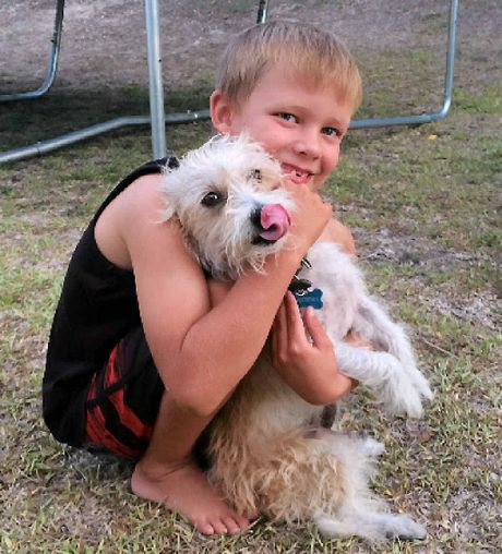 "CHERISHED MEMORIES: Zak Pain with his beloved Silky Terrier Bobbie Bingo. Donna Pain described Bobbie Bingo as a ""gentleman"" of a dog."