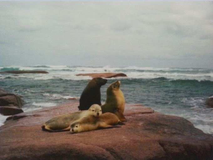 Allan Bell's photo of the four sea lions