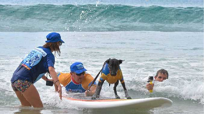 HANGING PAWS: Bella shows off her style at dog surfing for beginners at Noosa First Point last year.