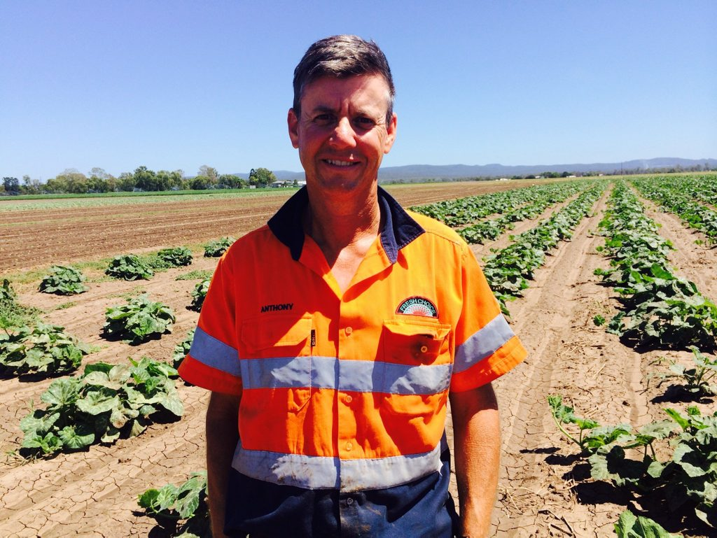 Lockyer Valley Growers president and vegetable producer Anthony Staatz.