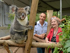 Koala chlamydia vaccine success brings hope