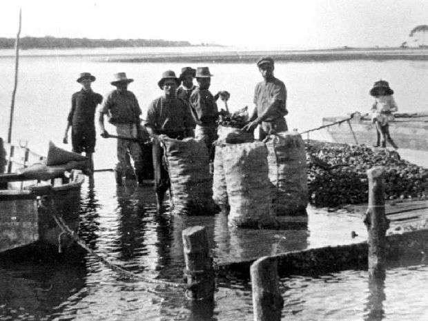 Bagging oysters for James Clark at Poverty Point, Pumicestone Passage, in 1910.