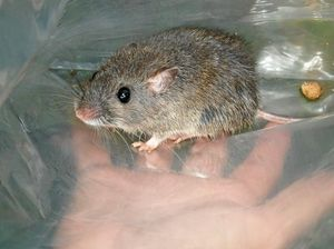 Critical habitats managed for cute critters