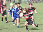 Junior rugby league - U/8 Wallaroos (blue) V. Seagulls (red). Will Kruger (Seagulls) eyes off the defence after making a break downfield. Photo: Alistair Brightman / Fraser Coast Chronicle