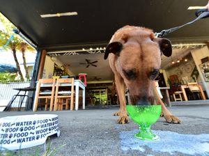 Dog menu at Velo Project Cafe Mooloolaba
