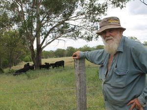 After battling drought, North Burnett cattle face a pest