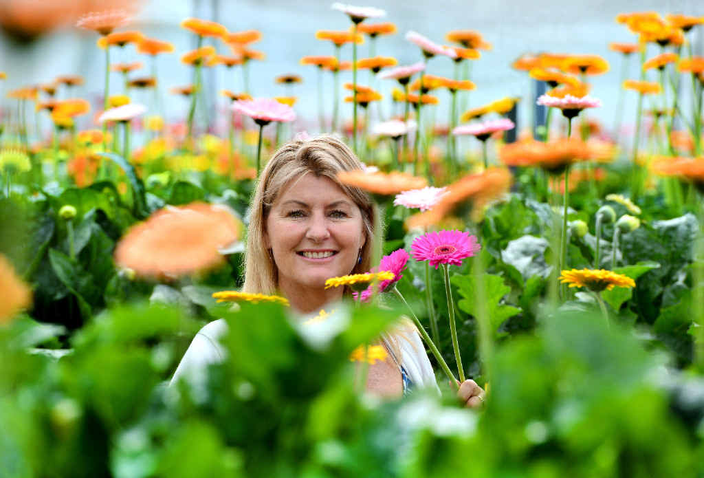 FLOWER POWER: Lynn Mills at her gerbera farm in Eudlo which produces flowers for her stall at the Caloundra Street Fair.