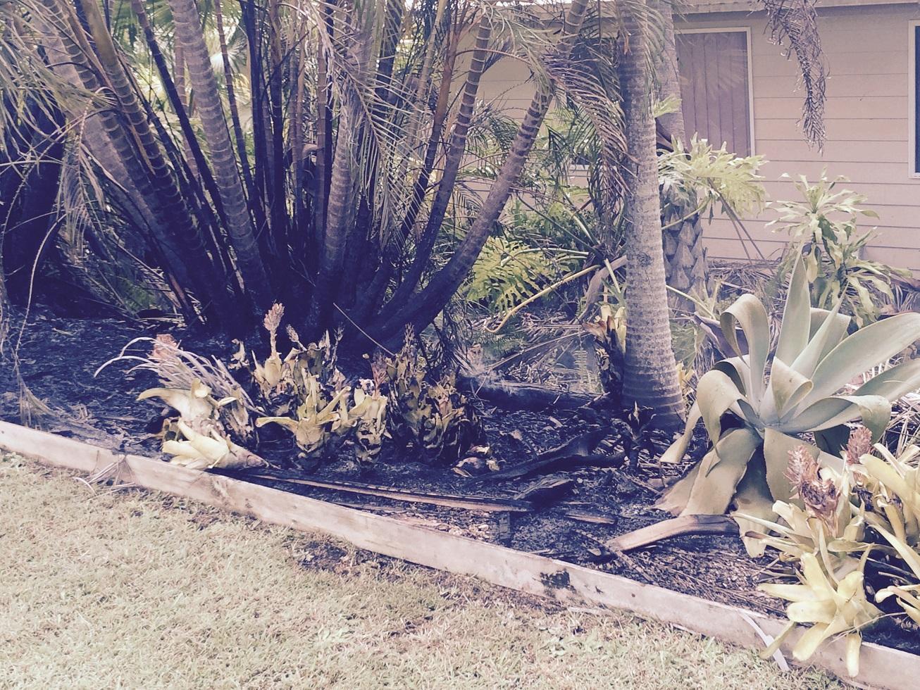 A garden damaged in an alleged arson attack at Beerwah