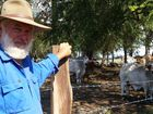 Taroom grazier Errol Otto on his Boggomoss property, which is located in the cattle tick free zone.