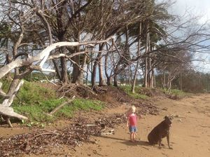 Vandals injecting poison into trees at Grasstree Beach