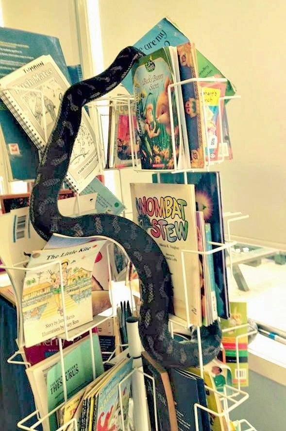 This snake decided he wanted to hang out in a classroom at The Channon Public School yesterday.