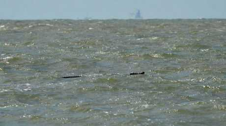 Crocodile spotted in the waters off Slade Point. Photo Heath Snedden