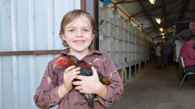 Fraser Williams, 6, showed age was no barrier in the Chook Showing Competition. Photo Barclay White / South Burnett Times