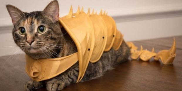 This moggy is ready for battle.