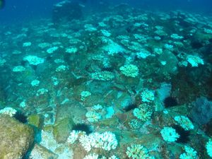 Documentary to expose coral bleach is killing reef