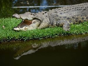 BUDGET: Crocodiles just one of the big winners for Mackay