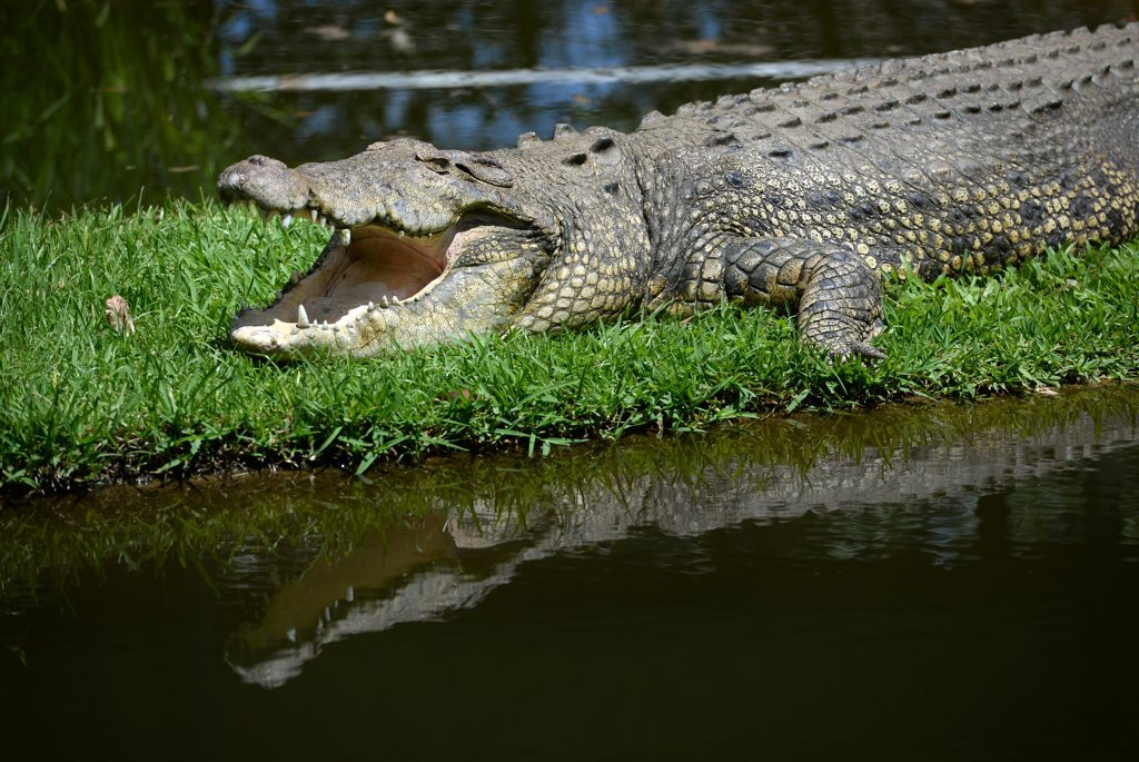 British backpackers have had a win after being underpaid by a Far North crocodile farm.