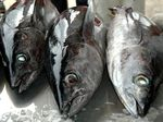 THE Sunshine Coast community is under risk of food poisoning through the consumption of yellowfin tuna purchased from local fish markets.