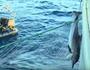 Sea Shepherd shows illegal fishing