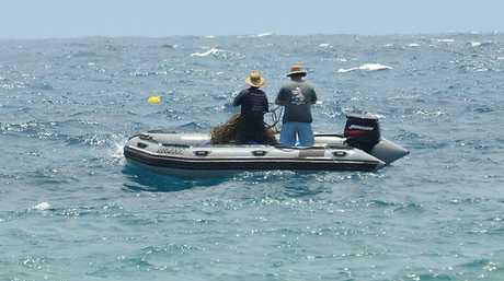 Shark net contractors check nets.