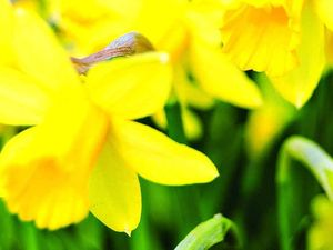 Gardening: Bulbs are buried treasures, weave some magic