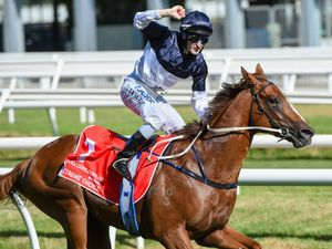 Will coveted Golden Slipper fit Extreme Choice?