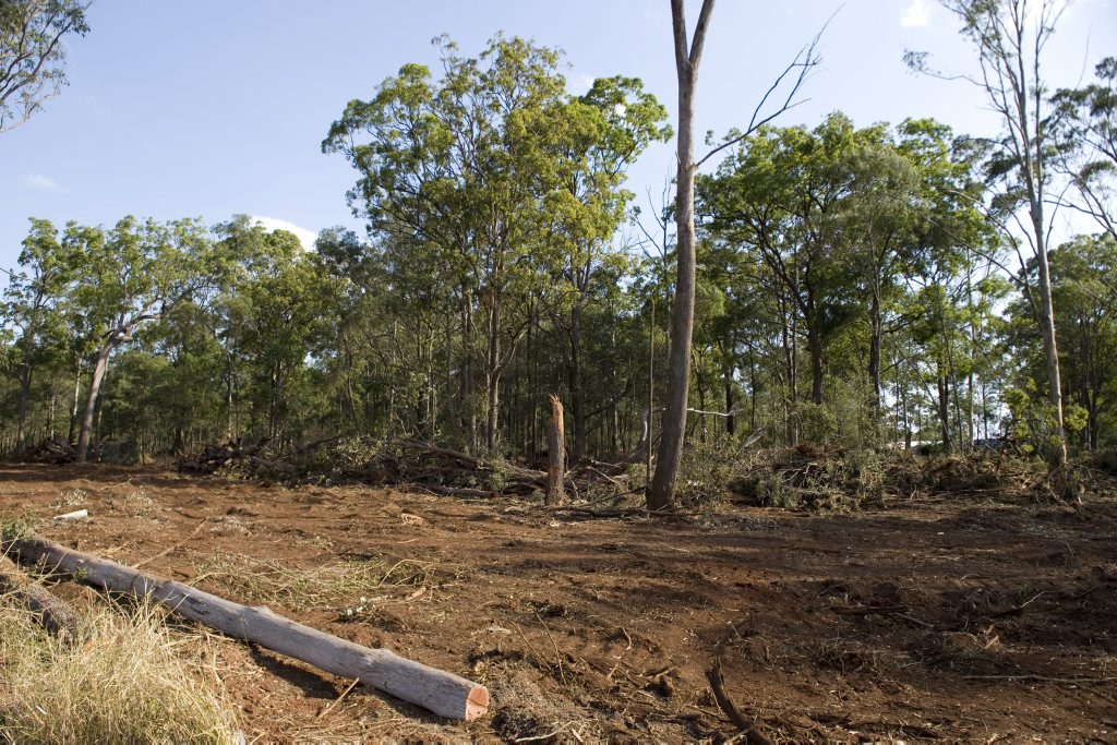 Land cleared for production.