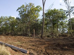 Qld to introduce new land clearing laws