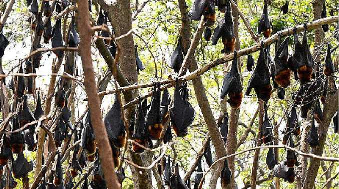 Perrett and Katter agree residents should be able to take action if they are plagued by flying foxes.