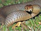 Experts have said the high number of snake bites is normal for this time of year.