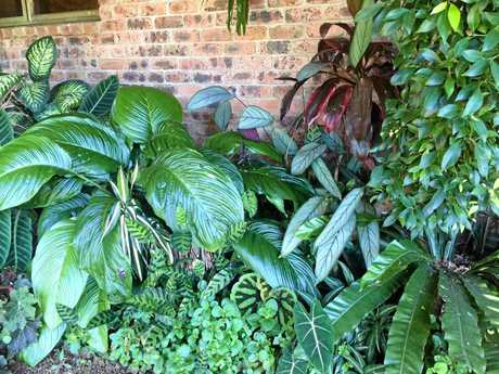 A brick area under the house allows plants to grow in a manmade micro climate.