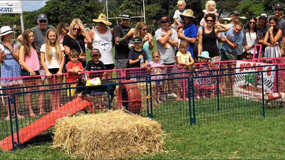 Pig races around an obstacle course entertain the crowd.