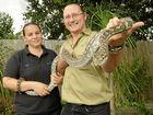 Snake bite victim mistook Eastern Brown for pet python