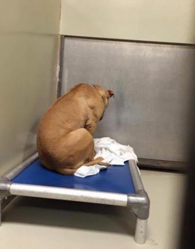 March the depressed dog stares at the wall. Photo: Facebook