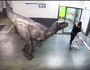 WATCH: Hamish and Andy terrify people with robotic dinosaur