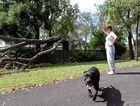 STRUCK DOWN: Branyan resident Vicki Fallon heard an almighty crash when lightning struck her neighbour's tree.