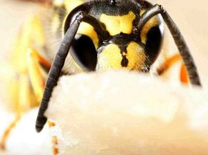 Exterminator goes into battle with car-sized wasp nest