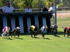 GREYHOUNDS: The start of race one at Thabeban Park. Photo: Mike Knott / NewsMail