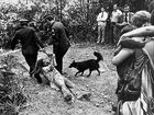 A male protester is dragged down a dirt track by two policemen. It was the first public image of Australia's first forest blockade, at Terania Creek. It won the newspaper's Photo of the Year Award in 1979.
