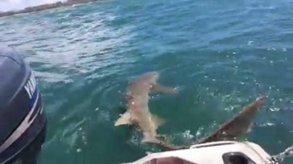 Wayne Tomkins caught this shark off the Mackay coast Photo: Contributed